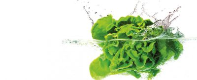 Washing & Checking Lettuce on Shabbos or Yom Tov
